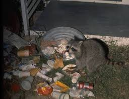 Who's to say I wouldn't see a raccoon if the trash were left there a bit longer? (Photo source: http://dailydinosaur.wordpress.com/)